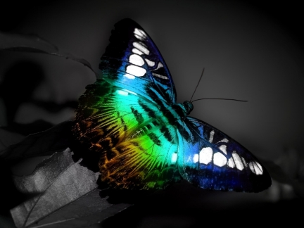 mariposa-fosforescente.jpg