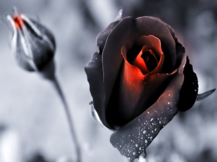 Resultado de imagen para rosas tras la ventana lloviendo
